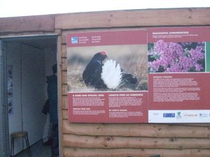 Outside the hide the nearest I got to a Black Grouse!